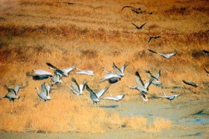 ROK_Han-River-Estuary_White-Naped-Cranes